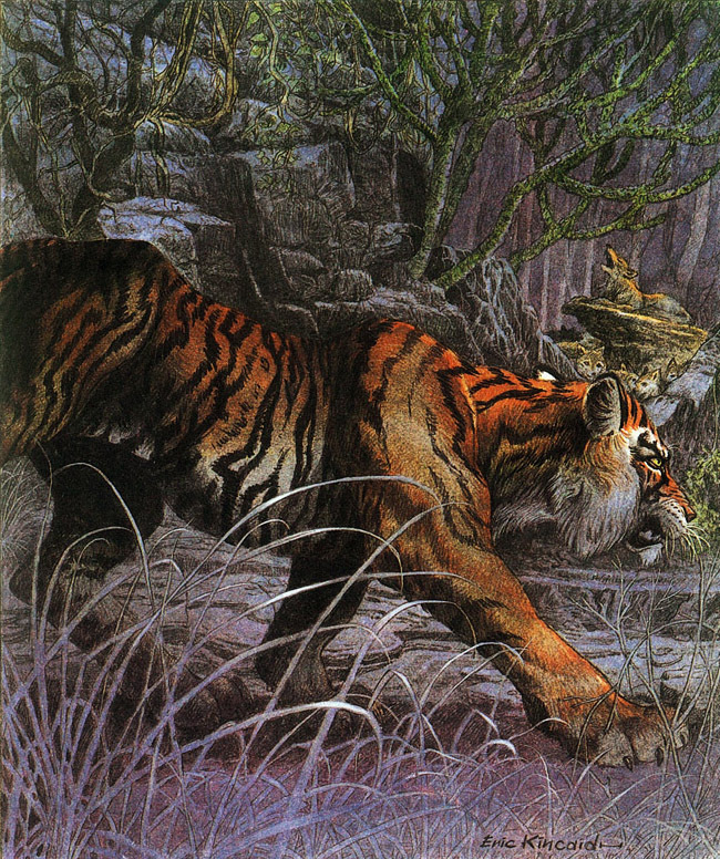 "Eric Kincaid ""Jungle Book"""