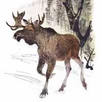 Георгий Никольский «Год в лесу»