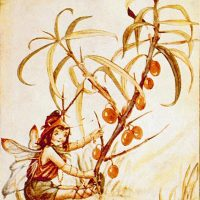 Nellie Donker «De bessen elfjes»